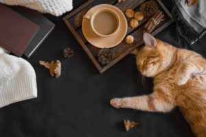 cat sleeping next to a cup of coffee